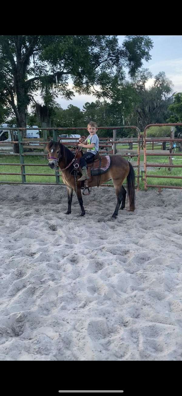 and-on-left-front-leg-pony