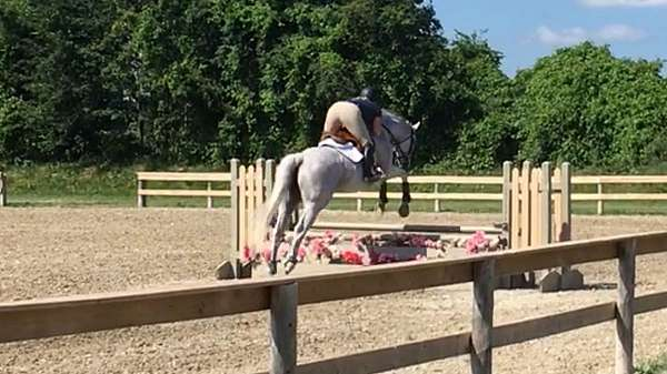low-level-eventing-horse