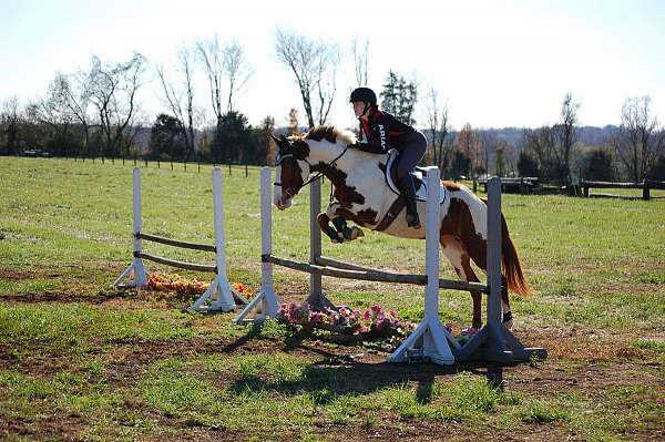 eventing-paint-horse