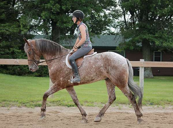 friesian-spotted-horse