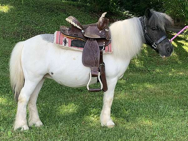 grey-white-foal-for-sale