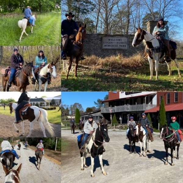 lesson-spotted-saddle-pony