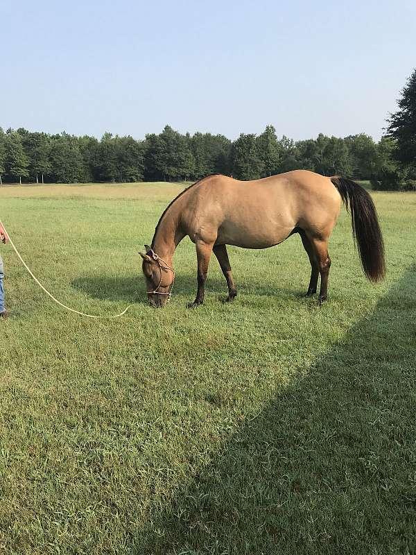 quarter-horse-for-sale