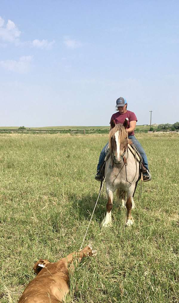 trail-riding-gypsy-vanner-horse