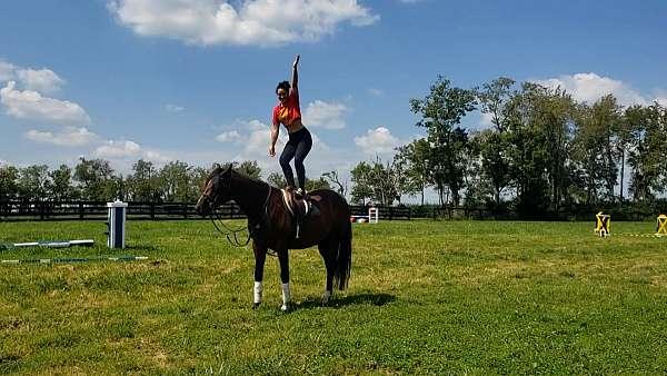ottbs-for-sale-thoroughbred-warmblood-horse