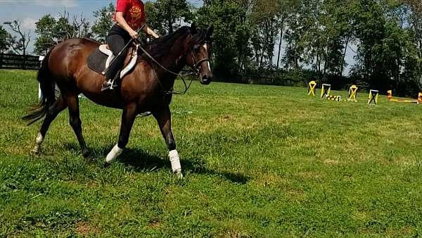 barbie-thoroughbred-horse