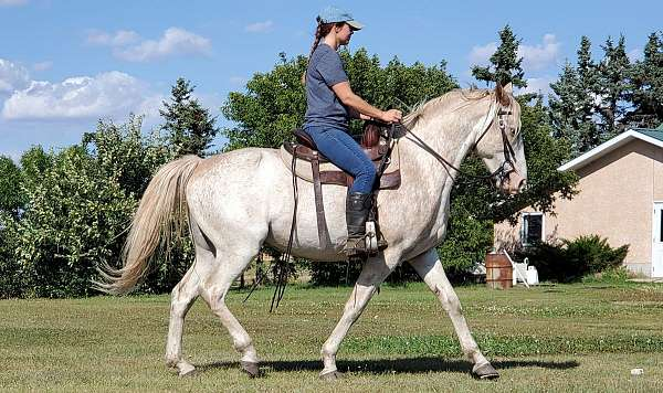 youth-single-footing-horse