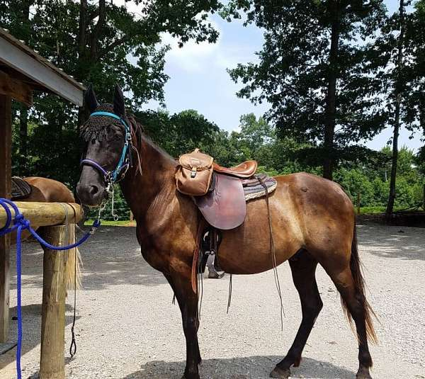 old-lady-tennessee-walking-horse