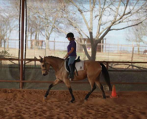 pre-andalusians-azteca-horse