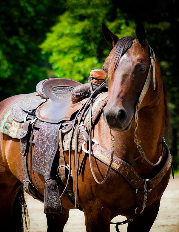 bay-trail-class-competit-horse