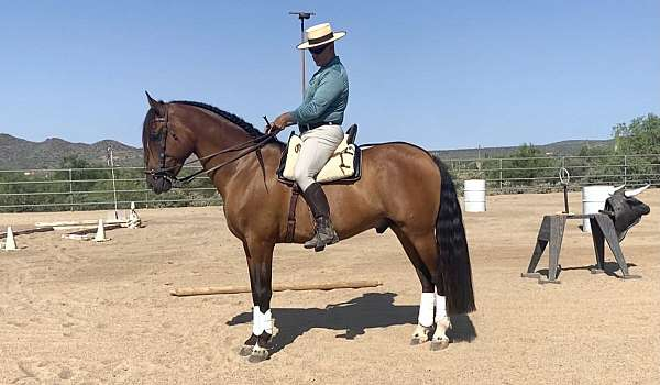 slow-andalusian-horse