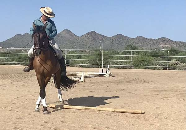 distance-andalusian-horse
