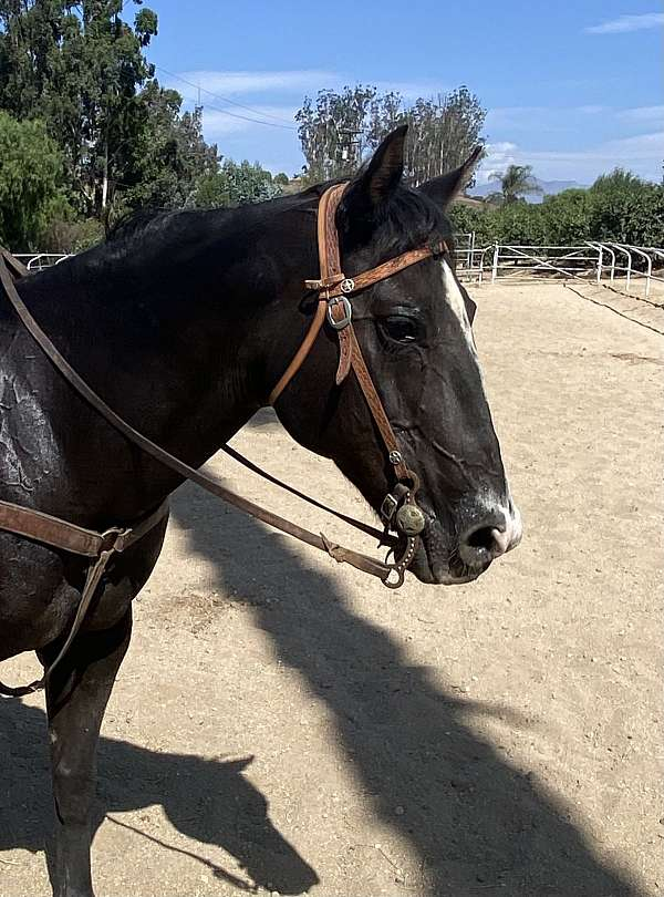 black-trained-horse