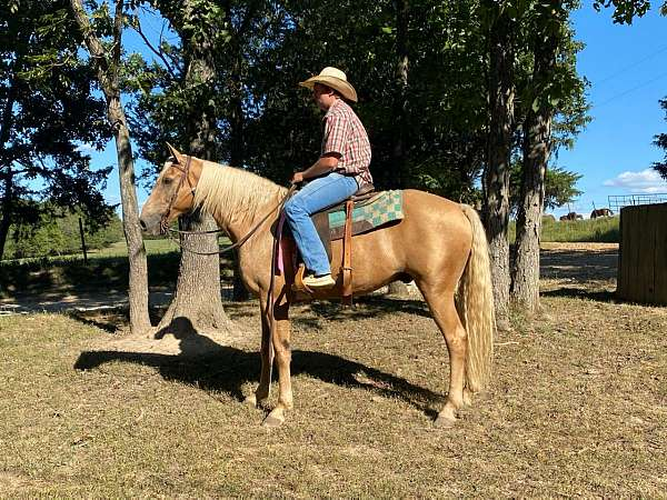 black-palomino-horse-for-sale