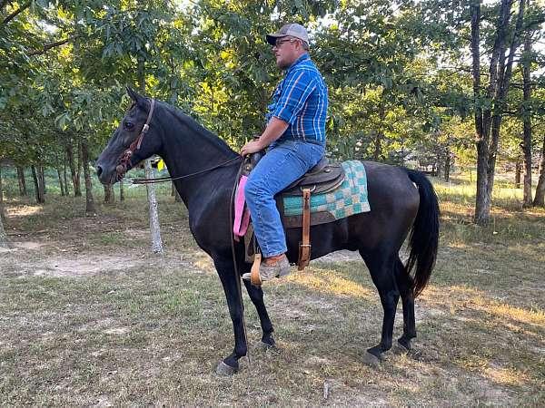 flashy-tennessee-walking-horse