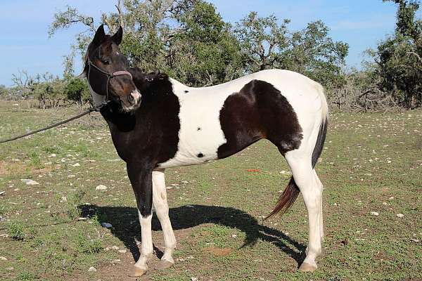 youth-mount-paint-horse