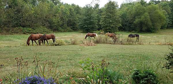 show-horse-equine-service