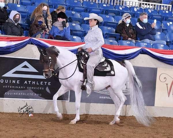 arabian--barrel-racing-horse-equine-service