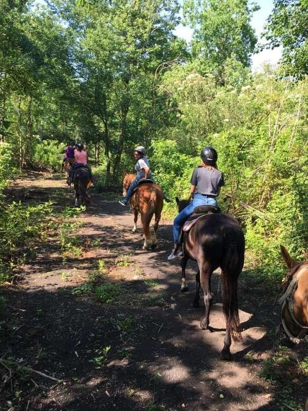 horse-boarding-in-avondale-la