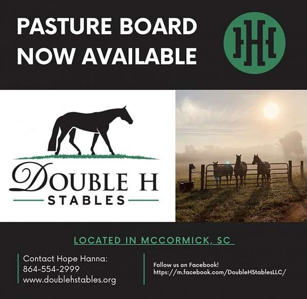 quarter-horse-equine-service-in-mccormick-sc