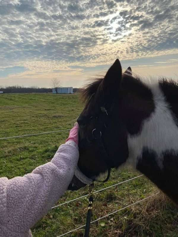 equine-riding-lessons