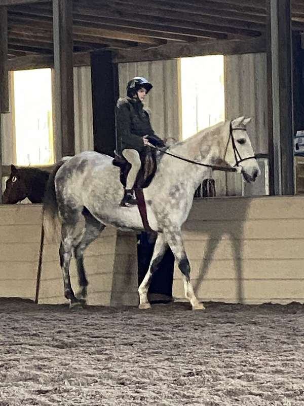 horse-equine-service-businesses-in-maryland