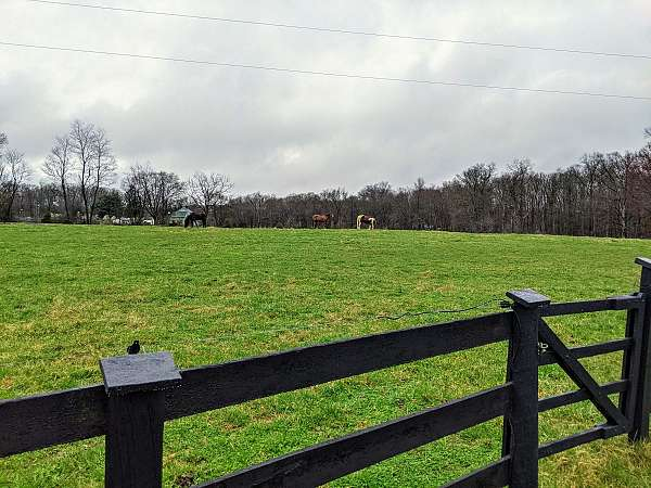 horse-equine-service-businesses-in-marshall-va