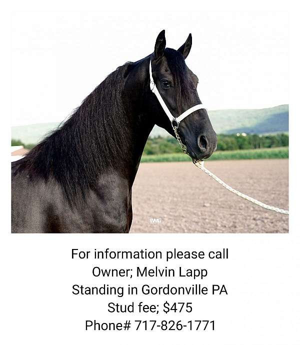 horse-equine-service-businesses-in-gap-pa