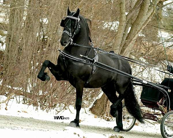 equine-breeders