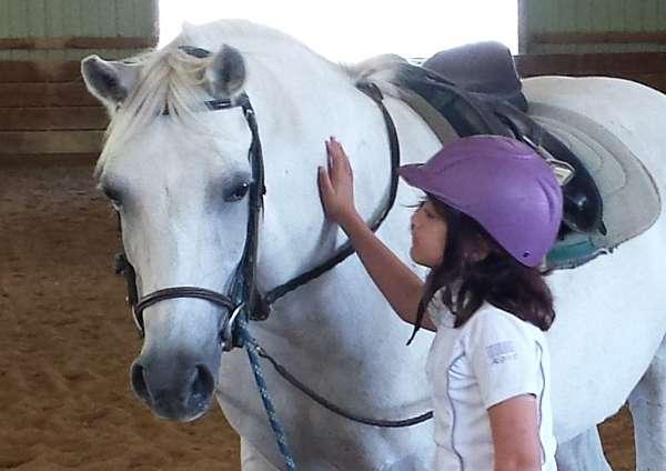 all-around-horse-equine-service