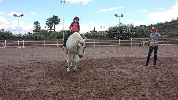 pleasure-horse-equine-service