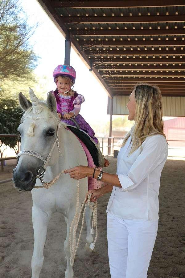 all-purpose-horse-equine-service