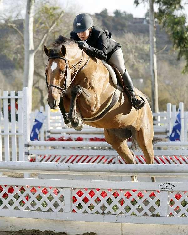 horse-boarding-in-julian-ca