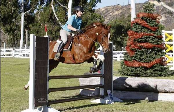 horse-equine-service-businesses-in-julian-ca