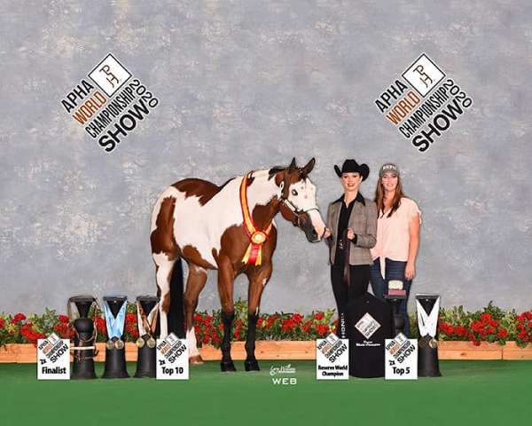paint-horse-hunter-horse-equine-service