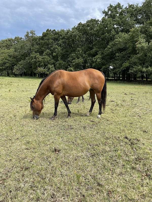 quarter-horse-equine-service-in-wills-point-tx