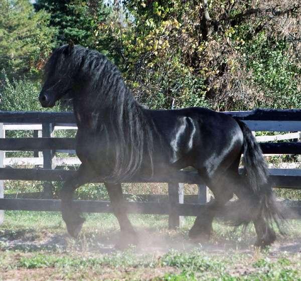 show-winner-horse
