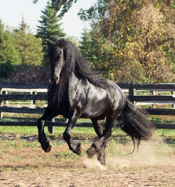 black-all-around-horse