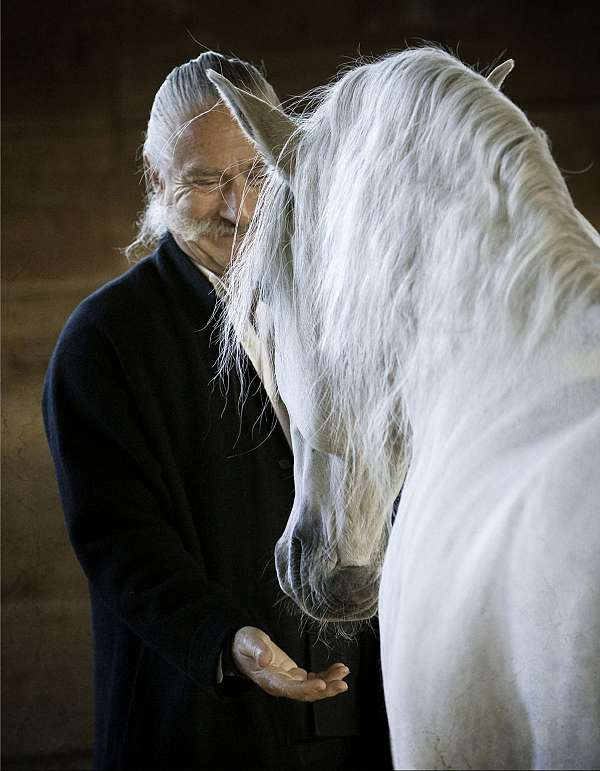 tall-lusitano-horse