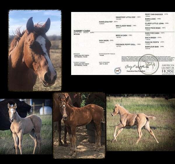 rh-very-partial-coronet-horse
