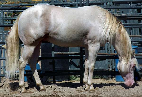 easy-to-work-with-quarter-horse