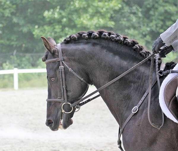 youtube-video-morgan-horse