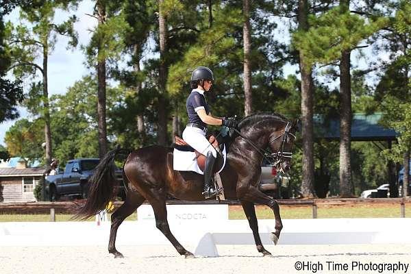 other-morgan-horse