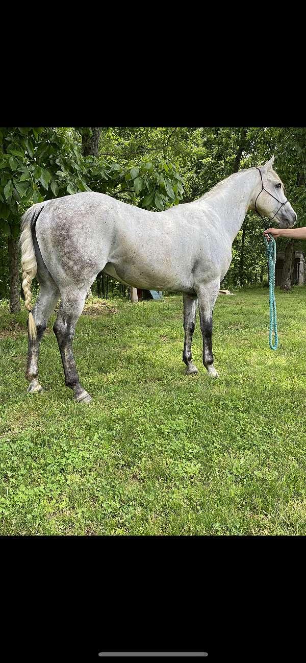 grey-all-around-horse