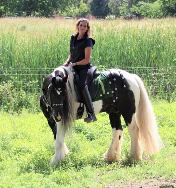 heeling-gypsy-vanner-horse