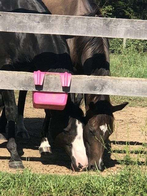 bay-overo-belly-spot-horse