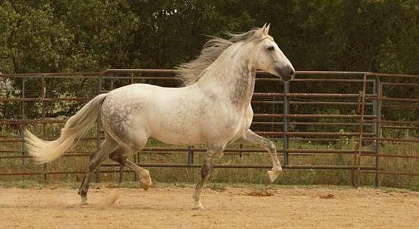 star-2-socks-horse