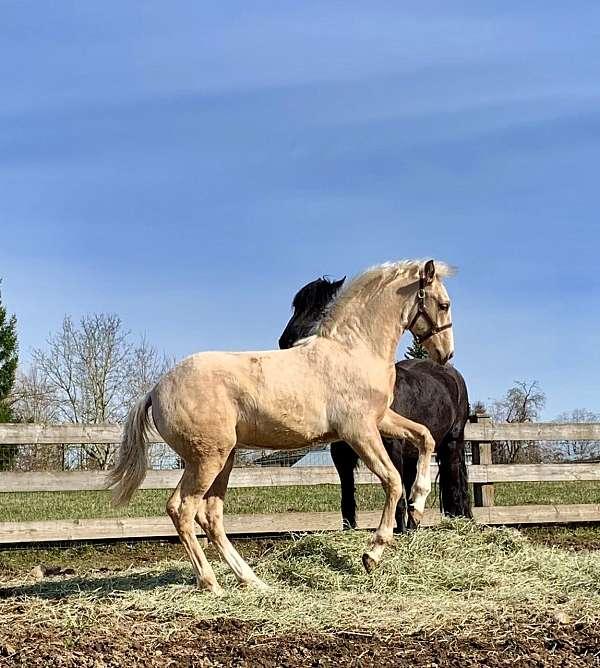 chestnut-horse