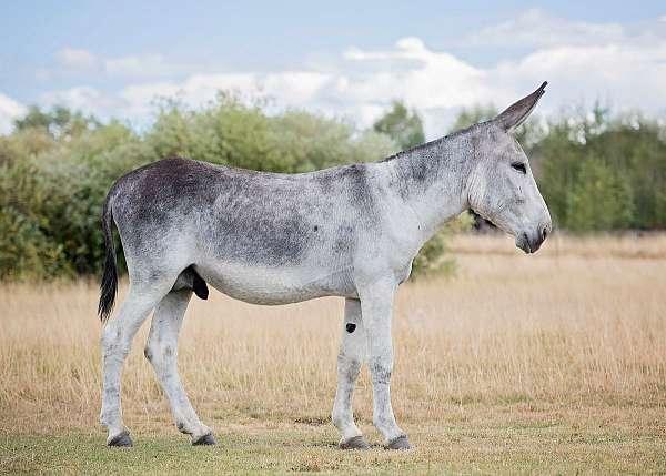 blaze-donkey