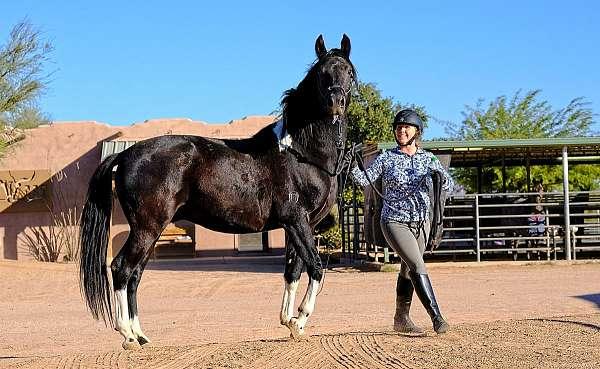 marchador-horse
